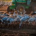 בלוג הצילום של עפר קידר | עגורים אגמון החולה | טיול אקסטרים לצפון