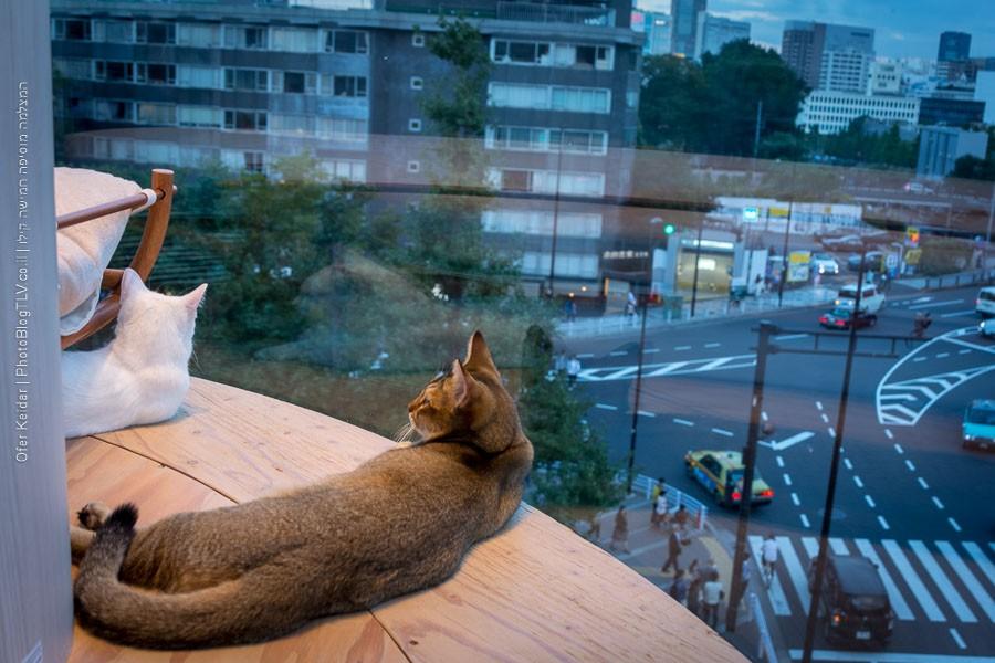 טוקיו, יפן | המצלמה מוסיפה חמישה קילו | בלוג הצילום של עפר קידרטוקיו, יפן | המצלמה מוסיפה חמישה קילו | בלוג הצילום של עפר קידר