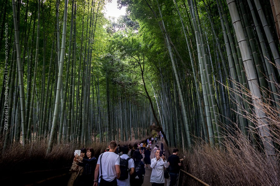 יער הבמבוק - קיוטו, יפן | Kyoto, Japan| המצלמה מוסיפה חמישה קילו | בלוג הצילום של עופר קידר