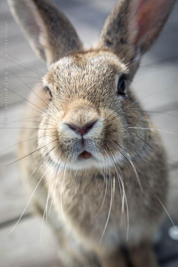 אי הארנבים אוקונושימה, יפן | Ōkunoshima rabbit island, japan | המצלמה מוסיפה חמישה קילו | בלוג הצילום של עפר קידר