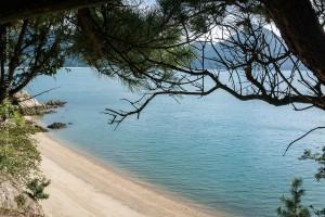 אי הארנבים אוקונושימה, יפן | Ōkunoshima rabbit island, japan | המצלמה מוסיפה חמישה קילו | בלוג הצילום של עופר קידר