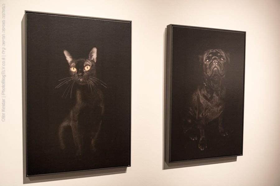 מוזיאון ישראל, ירושלים | כלבים וחתולים | המצלמה מוסיפה חמישה קילו | בלוג הצילום של עפר קידר