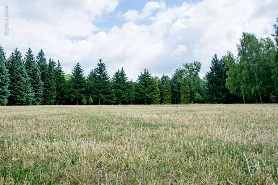 פוזנן למטייל - מדריך אטרקציות בפוזנן, פולין   המצלמה מוסיפה חמישה קילו   עפר קידר