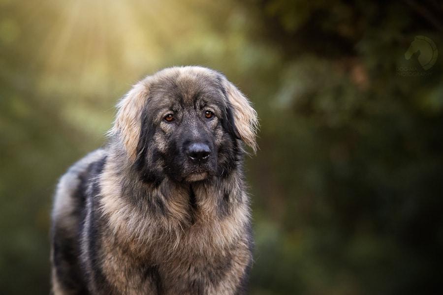 צילום: אלינור רויזמן | Dog-Ma Photography